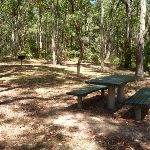 Picnic table at Mahognay Picnic Area in Blackbutt Reserve (401212)