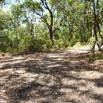 Trail near Mahognay picnic area in Blackbutt Reserve (401260)