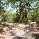 Wide trails near Mahognay Picnic Area in Blackbutt Reserve (401293)