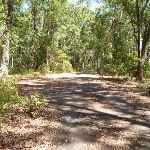 Sealed trail in Blackbutt Reserve (401329)