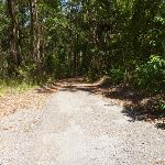 Wide trail in Blackbutt Reserve (401440)