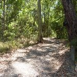 Trail through forest in Blackbutt Reserve (401497)
