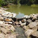 Large pond with outlet at Richley Reserve in Blackbutt Reserve (401530)