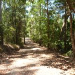 Uphill Trail near Richley Reserve in Blackbutt Reserve (401641)