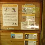 Information board at the Wildlife Exhibits in Carnley Avenue Reserve (402088)
