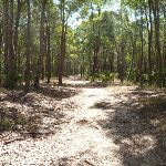 Eucalypt forest Green Point Reserve (402451)