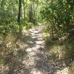 Forest track near Green Point on Lake Macquarie (403045)
