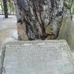 Plaque at Explorers Tree (410759)