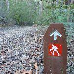 Six Foot Track arrow post below Nellies Glen (411428)