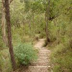 Six Foot Track winding along a long set of timber steps east of the Coxs River (413384)