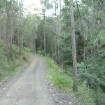 Dirt road east of Kiangatha Gate (415664)