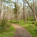 Six Foot Track west of Black Range Camping Ground (417179)