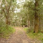 Trail south of Jenolan Caves Cottages (418043)