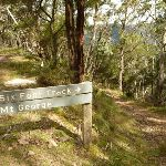 Six Foot Track north of Mount George (418373)