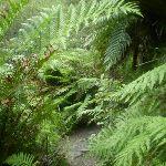 Ferns nearing Lillian's Glen (41901)