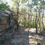 Wide section of the Berowra Track (419068)