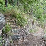 Historic steps near the Intersection of Berowra and Mt Ku-ring-gai tracks (420775)