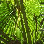 light shining through fern (43840)