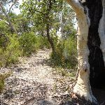 Walking through the scribbly gum forest east of Cherry Lane on the Great North Walk (446321)