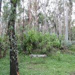 Blue Gum Forest sign (49841)