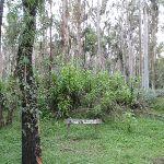 Blue Gum Forest sign (49841)