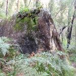 Track past lone rock (50519)