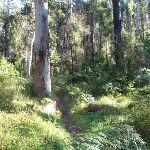 Western edge of Blue Gum Forest (50714)