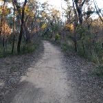 Baltzer Lookout service trail (51569)