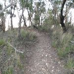 Bushtrack to Baltzer Lookout (51578)