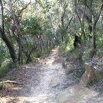 Neates Glen track (51743)