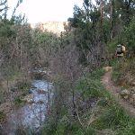Track on hillside above Grose River (52364)
