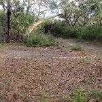 Patonga Rest area (53501)
