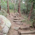 Near the bottom of Patonga Track (54227)