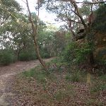 Service trail to Booraba Ave (54491)