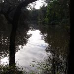 Lane Cove River from Riverside walk (54860)