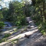 Track along Blackbutt Creek (55262)