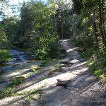 Track along Blackbutt Creek (55262)