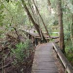 Boardwalk along LaneCove River (55886)