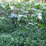 Exotic plants (56303)