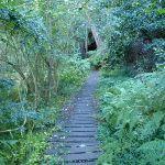 Great North Walk near Epping Rd (56504)