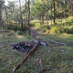 Watagan creek GNW campsite (59354)