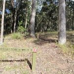 Great North Walk sign post in tall wooded forest (59717)