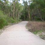 The Jungo pathway (6097)