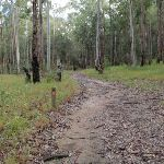 property's service trail (61061)