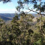 view through the trees (61196)
