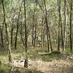 Bushland in the Berowra Valley (6127)
