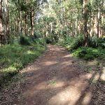 following the dirt roads (61778)