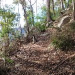 Great North Walk bushtrack (62243)