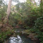 looking up creek (63845)