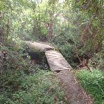 crossing a bridged creek (63932)